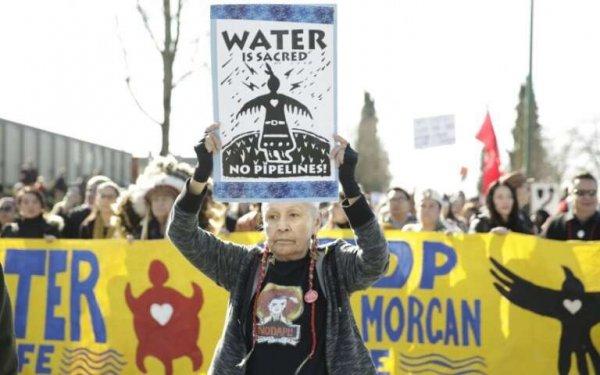 Экологи негодуют: Строительство трубопровода в Канаде может уничтожить популяцию косаток