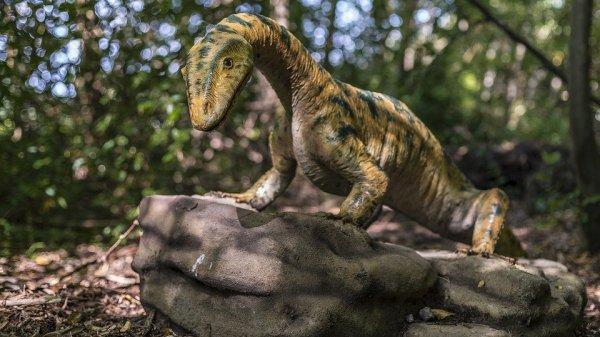 В Австралии обнаружен новый вид динозавров