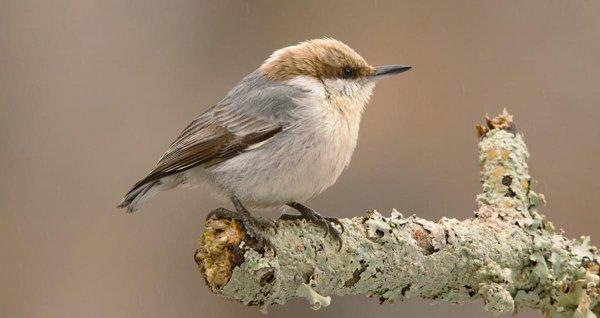 Ученые: Птицы, которые не находят пару, нянчат чужое потомство