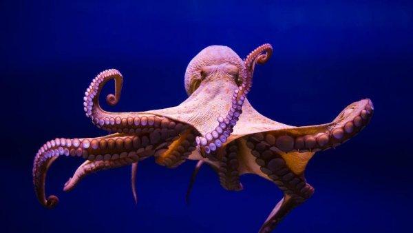 Угроза в океане: Осьминогов на Землю доставили инопланетяне