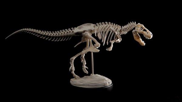 Палеонтологи обнаружили останки самого крупного тираннозавра