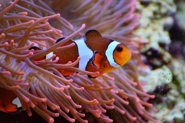Обречены ещё до рождения: Учёные рассказали, как человеческий шум уничтожает морских обитателей