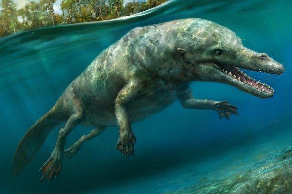 «Древний Крокодилоид с Нибиру»: Учёные нашли свидетельства инопланетного происхождения жизни на Земле - уфолог