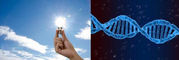 Учёные придумали, как с помощью ДНК питаться солнечной энергией