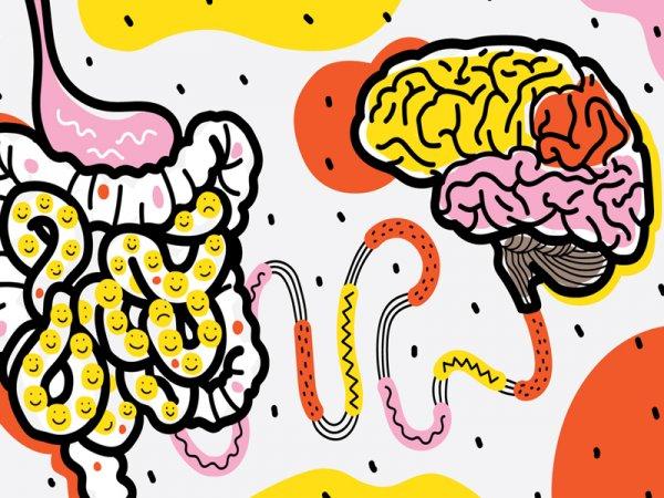 Учёные впервые смогли детально изучить влияние кишечных бактерий на организм