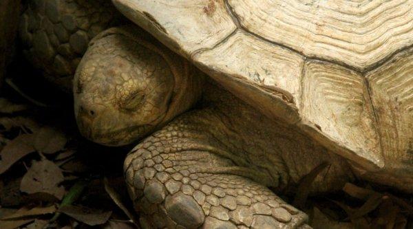 Учёные нашли останки древней черепахи пережившей своих сородичей на 30 миллионов лет