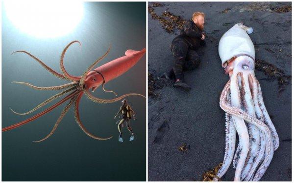 Длиной до 60 метров! Глобальное потепление привело к пробуждению гигантских «кальмаров-убийц»