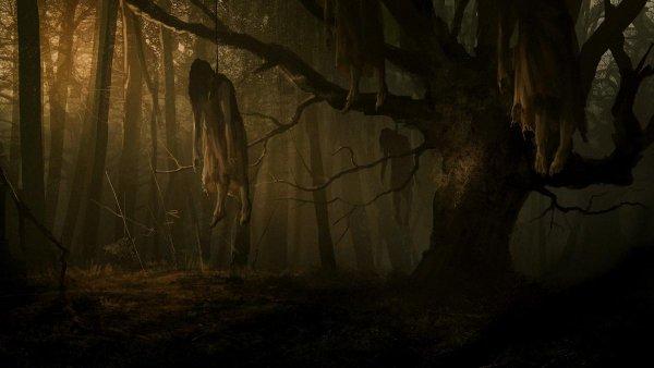 Дерево-душегуб: У знаменитого исполнителя желаний пропадают люди