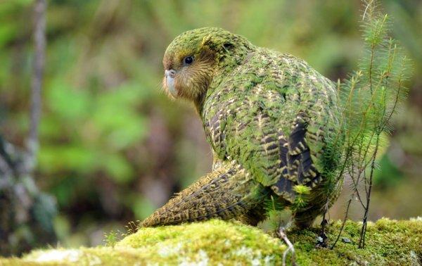 Второй шанс: Врачам удалось вернуть к жизни представителя древнего вида попугаев