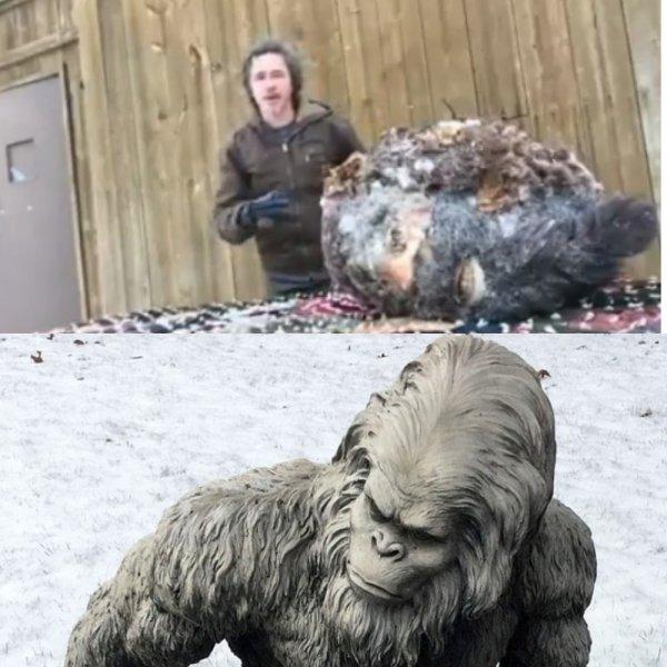 Бигфут оказался огромным: Американец заснял голову снежного человека