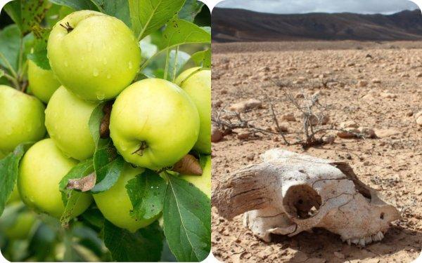 Животные вымерли из-за яблок? Стала известна причина массового исчезновения видов