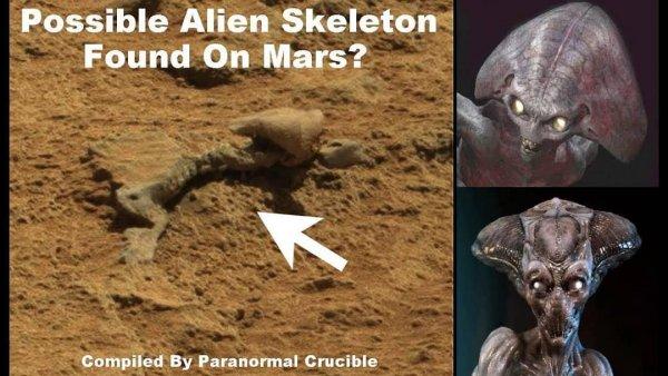 Утечка в NASA! Фото дохлого пришельца с Марса попало в сеть