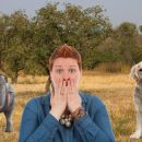 Слон размером с собаку: Животные на Земле с каждым годом уменьшаются в размерах