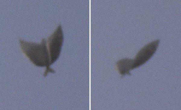«Нибируианская Кракозябра!» - Россиянина поразила встреча с крылатой рыбой-упырём
