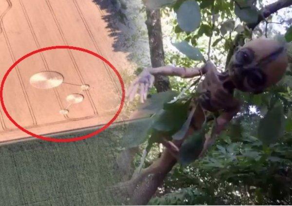 10-сантиметровый уродец: Мумия карликовых воинов Нибиру найдена на Кубани