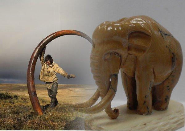 В Якутии найден скелет мамонта с уникальной отметкой на бивнях