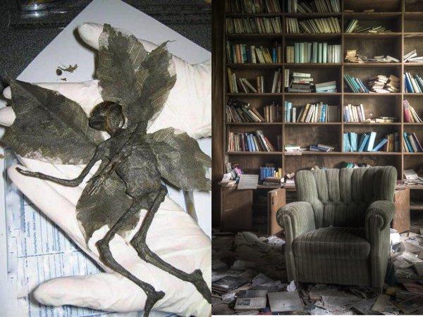 Фея-идиот с Нибиру: Пенсионерка нашла в книге «гербарий» пришельца