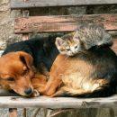Международный день бездомных животных