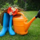 Интернет портал для дачников и огородников